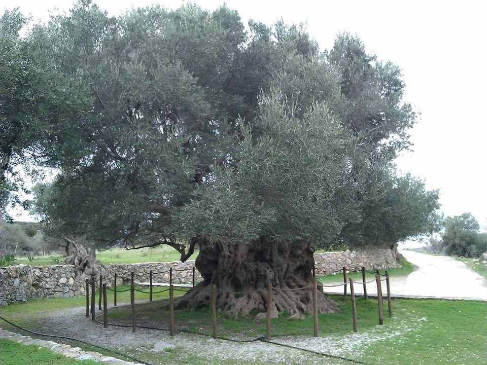 spiritual private tours crete- elissos