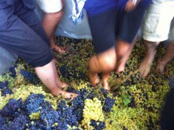 Experiential Wine Making