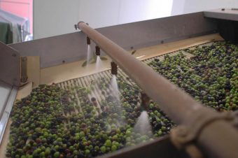 Olive Oil Factory